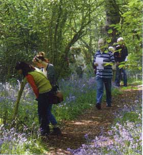 Open Day visitors enjoying the bluebells